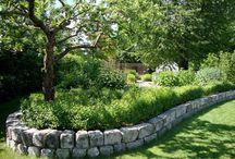 Trädgård fram