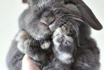 cute animal!