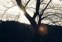 Film Photography / Film photography - Nikon, Miranda Senzorex, Mamiya