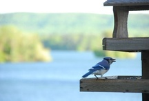 Hot Springs Getaway :: Lookout Point Wildlife / Lookout Point enjoys the wildlife that visits the property, especially the variety of birds, at our Hot Springs getaway.