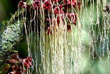 my virtual flower garden