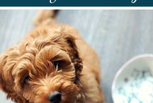 Pet Love / taking care of pets, pet advice, pet love, dogs, cats, how to take care of pets