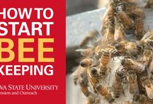 How To Start Beekeeping / Are you thinking about becoming a beekeeper? Our new UKnow video series breaks down this fascinating, growing culture and how to make it work for you:  / by ISU Extension & Outreach