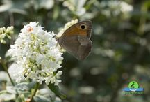 Butterflies / beautiful butterflies - Open the photo link to get the full size photo