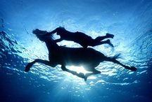Equus / Les plus belles bêtes sur Terre