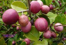 frutas de mi pais