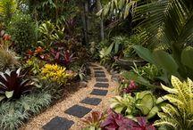 Gardening: Tropical