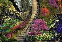 Grande Staircases / by Elizabeth Dahdah