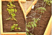 Raised Bed Gardening / Gardening