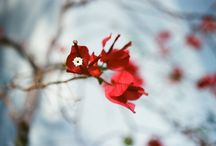 Photography Inspiration / by Salonee Pareek