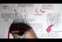 Immunology XV: Mucosal Immunology / by Alfredo Corell