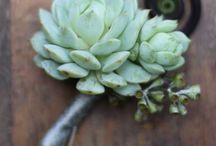Succulents / by Nonie S