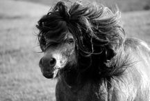 Of Manes and Tails / Tips and resources for keeping your horse's mane and tail healthy