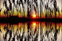 Příroda / obrázky