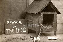 Pets / by Alamy