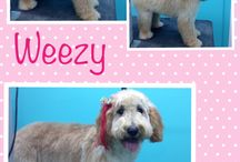Grooming Before and After / Check out some of the great looking coifs we do here!