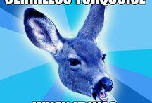 Native Art Deer Meme / Native art collectors, scholars, curators, art professors, and artists need our own meme!