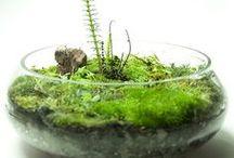 Florarium  - Terrarium