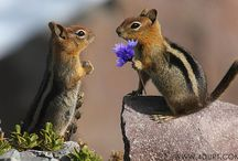 Cute Critters / by Stacy Pettigrew Veasey