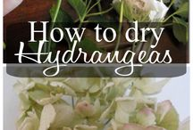Drying,preserving flowers/veg storage and flower extracts