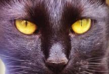 Luna The Cat / by Kristen