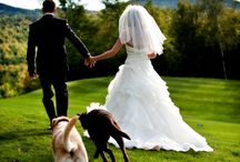 Wedding with pets / Whatever & wherever with your pets♡