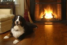 Pets & Wide Plank Floors / You love your pets, you love wide plank floors - your home can have it all with the right quality Carlisle Wide Plank Floors, hand crafted, built to last, loved by family members on two and four paws.