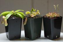 Carnivorous Plant Gift Sets