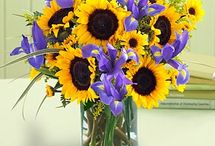 Irises & Sunflowers