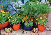 Garden, Green, Nature, Recycling