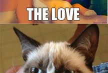 Grumpy Cat / by Ang Manship