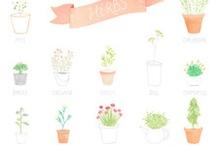 + ilustraciones