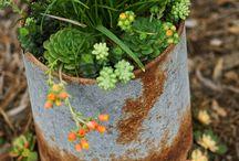 Garden / by Joyce Rutter Kaye