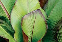 Végétations paint & photo