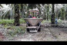 Palm OIL  Mechanization