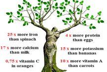 Moringa / moringa products