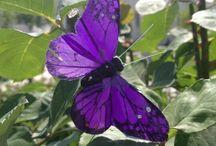 A Board for Ella my Beautiful Butterfly