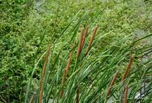 Plants, Shrubs and Lake Botany