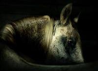 horses / by KARLA ORTIZ