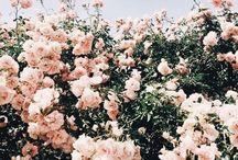✦ pretty things