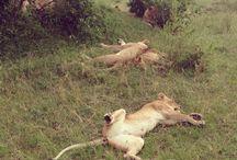 Kenya / Superbes photos de ce pays que j'aime. Karibuni Kenya!