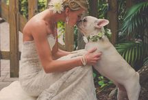 Dogs + wedding