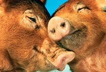 Animals - Piggies / by Lesley Stoll LaFuze