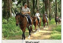 Singapore horse riding / Singapore Horse Riding is one of the most popular activities here that allures its natives as well as tourists to the large extent.