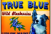 Blueberries for All / by Laura Hoekstra