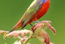Birds, animals