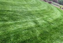 Lawn Care / Lawn CAre