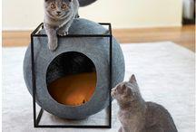 Cat things