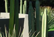 Design com plantas