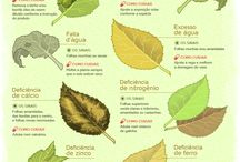 Cuidado com plantas